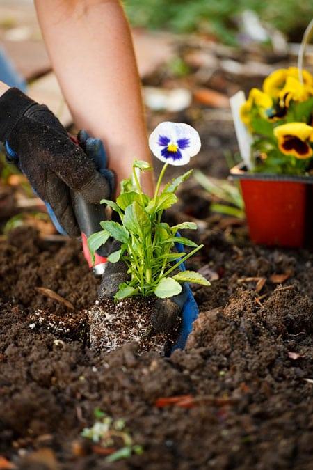 planter med plantejord